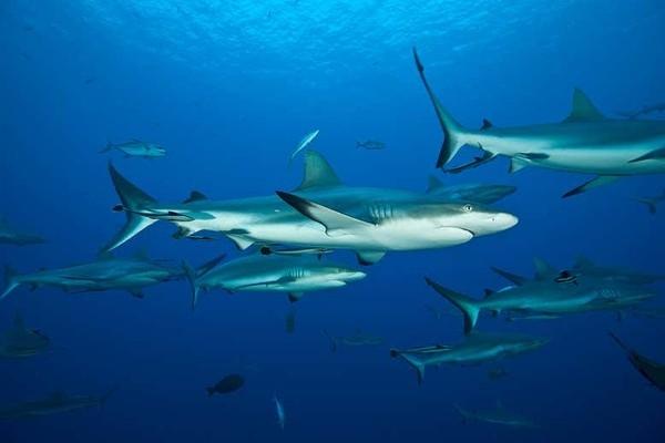 Интересный факт дня: Акулы умеют дружить