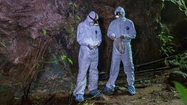 Коронавирус разнесли шахтеры: Предложена новая теория появления Covid-19
