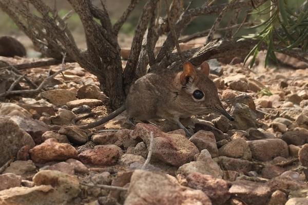 На видео попали давно потерянные виды животных Африки