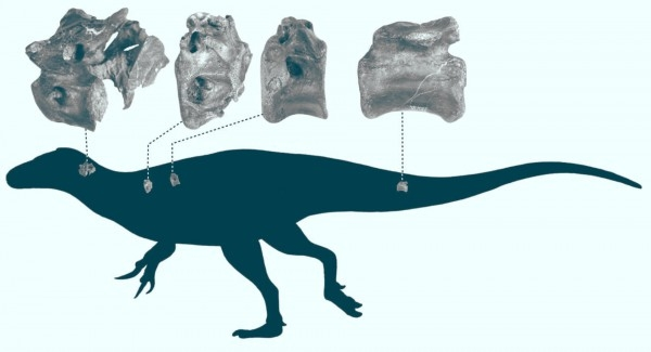 Найден новый вид динозавров с хрупким скелетом