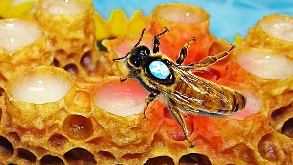 Необычные продукты пчеловодства: Эксперименты