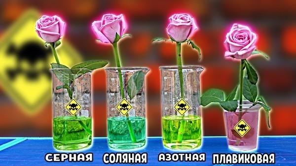 Что произойдет с розой в кислоте: Эксперименты