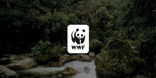 День в истории: 11 сентября - Запись человеческого голоса и появление WWF