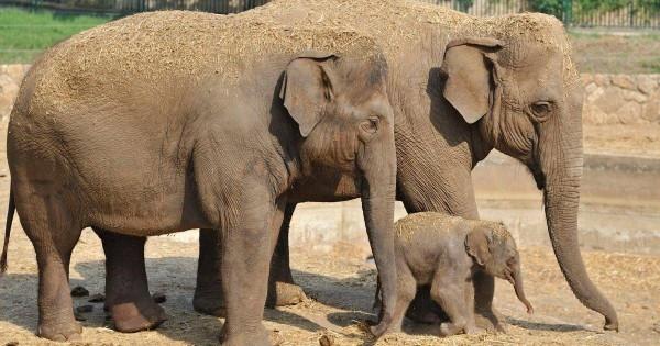 День в истории: 22 сентября - Защита слонов и рождение Фарадея