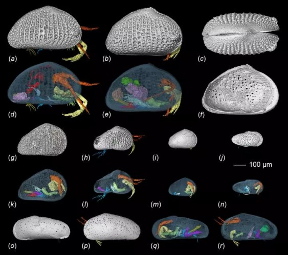 Интересный факт дня: Самой старой сперме 100 млн лет