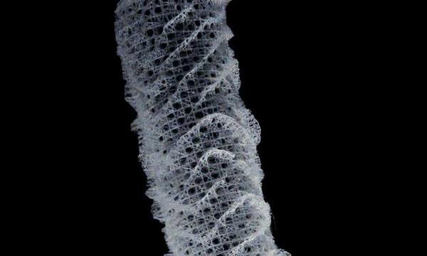 Морские губки хранили секрет прочности