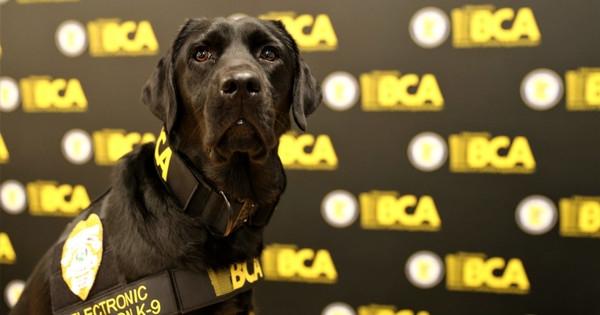 Полицейские собаки научились искать телефоны и флешки