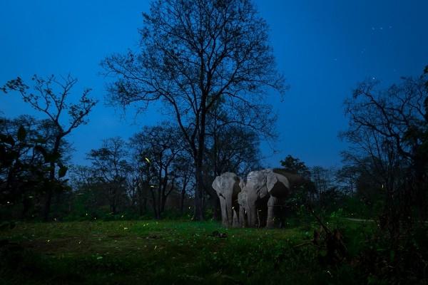 Природа в фокусе: Выбраны лучшие фото конкурса Nature inFocus
