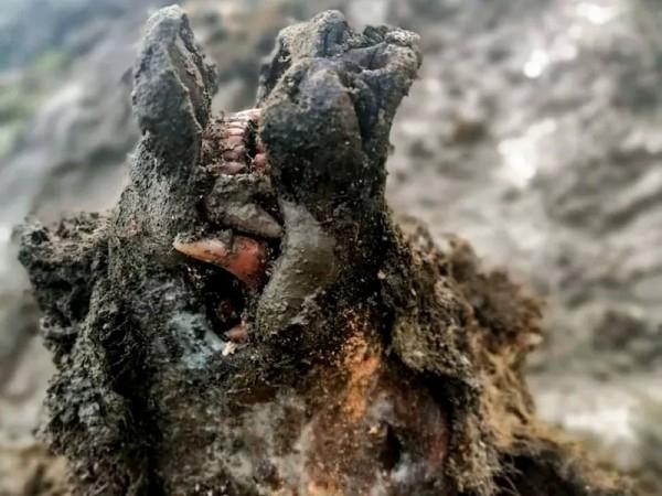 В Сибири оттаял вымерший пещерный медведь