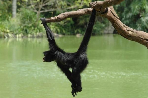 Почему нет млекопитающих с шестью конечностями?