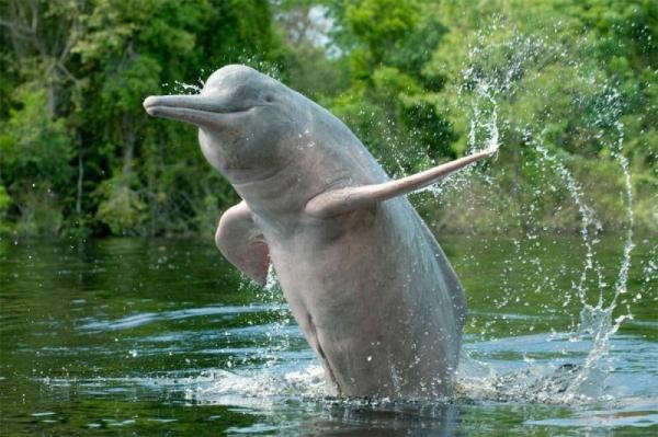 Взгляните на животных, которые вымерли в 21 веке